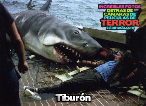 tiburon-detras-de-camaras