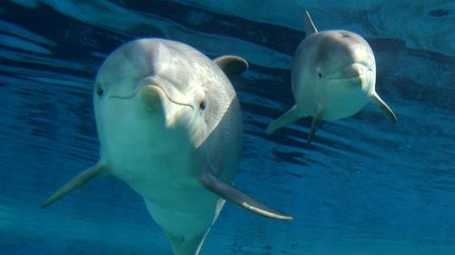 dolphis