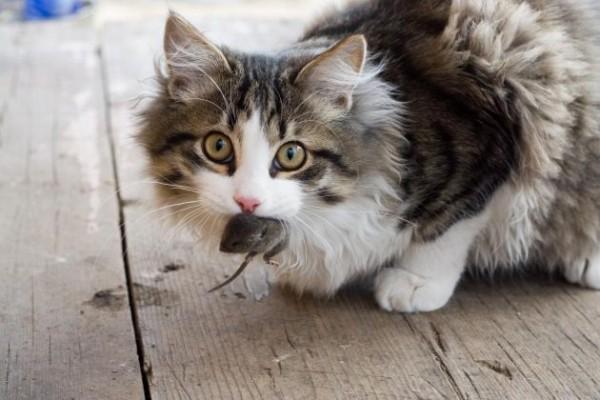 gato animal