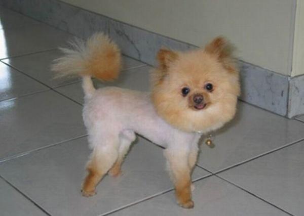 peinados feos perros13