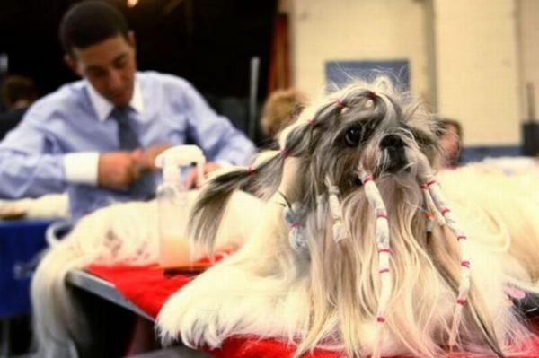 peinados feos perros15