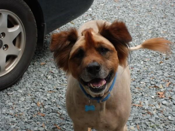 peinados feos perros19