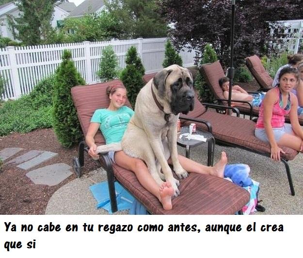 perros_gigantes