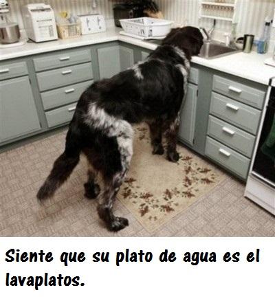 perros_gigantes10