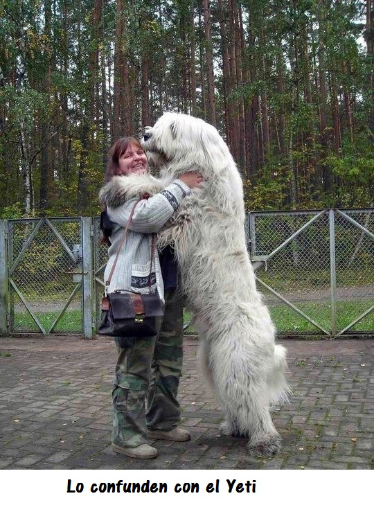 perros_gigantes3