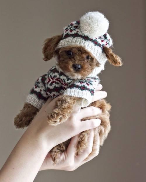 Doggie10