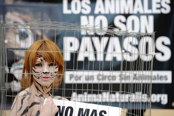Spain Animal Protest