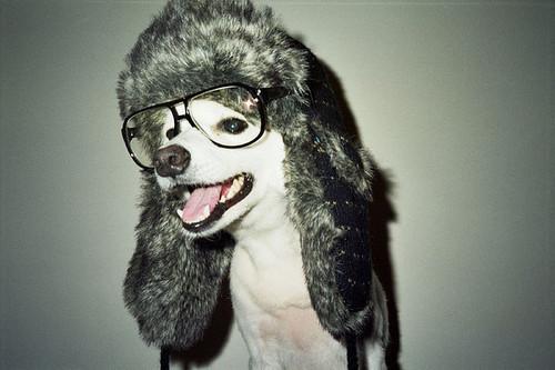 hipster dog10