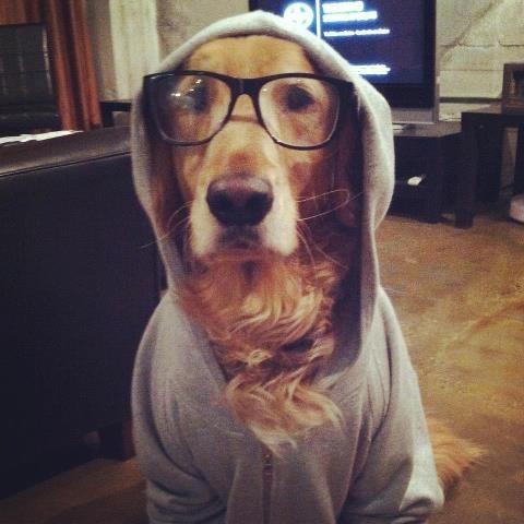 hipster dog11