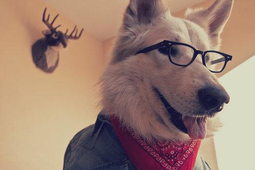 hipster dog12