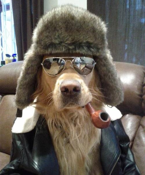 hipster dog13