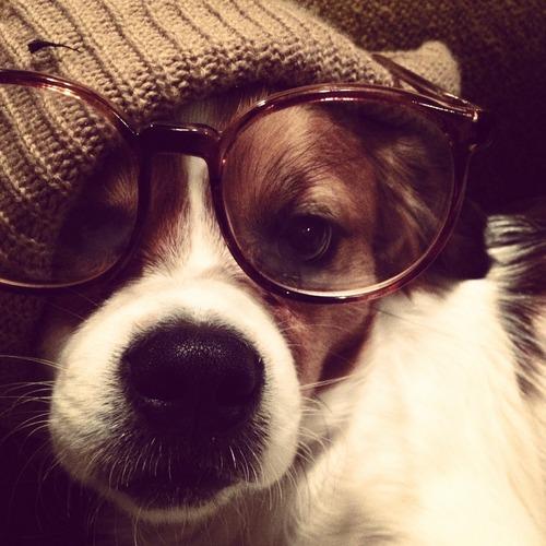 hipster dog14