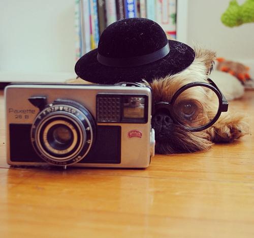 hipster dog15