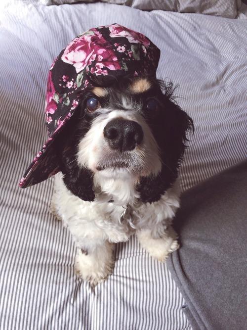 hipster dog4