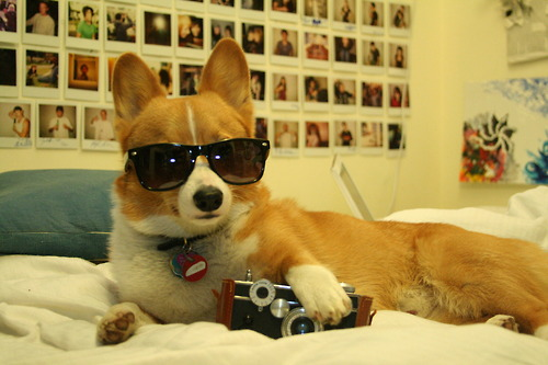hipster dog5