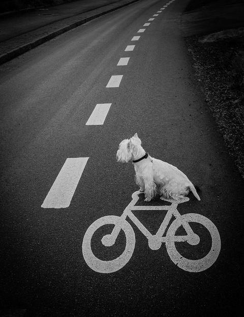hipster dog6