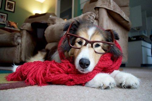 hipster dog7