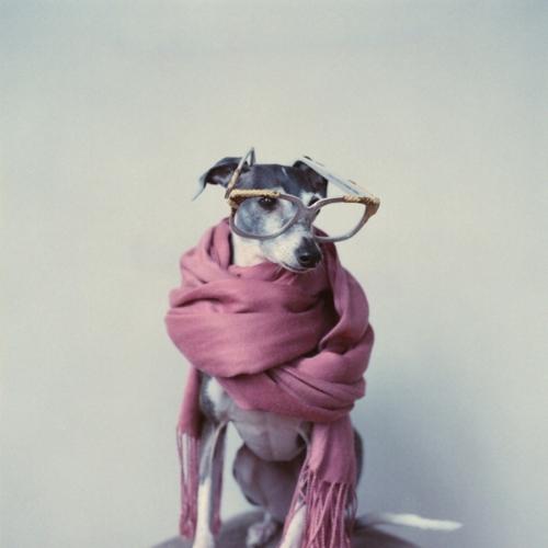 hipster dog8