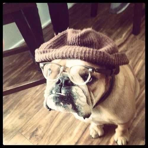hipster dog9