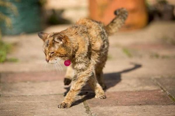poppy cat3