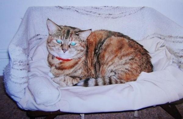 poppy cat6
