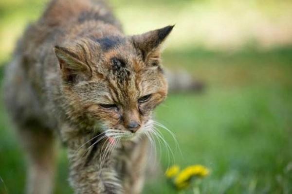 poppy cat7