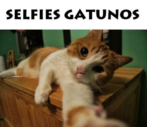 selfies gatos
