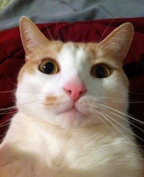 selfies gatos10