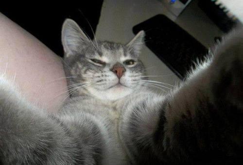 selfies gatos3