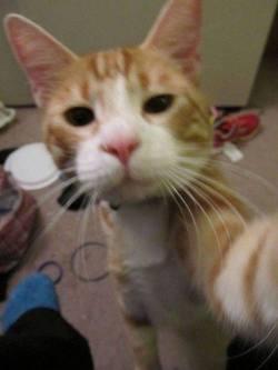 selfies gatos6