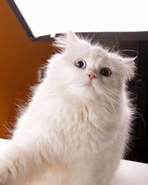 selfies gatos9