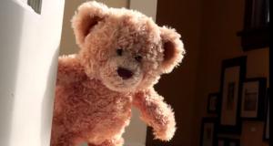 Teddy Bear Meets Best Friend