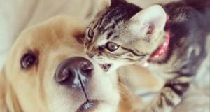 adopto a un gatito10