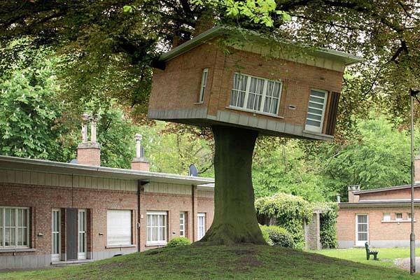 casas de arbol11