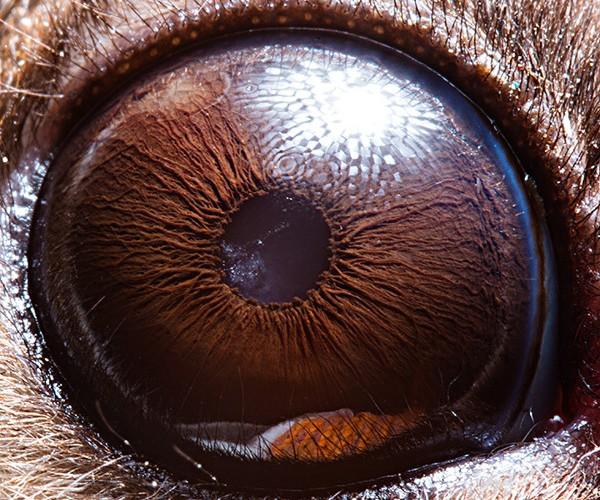 ojos alta resolucion15