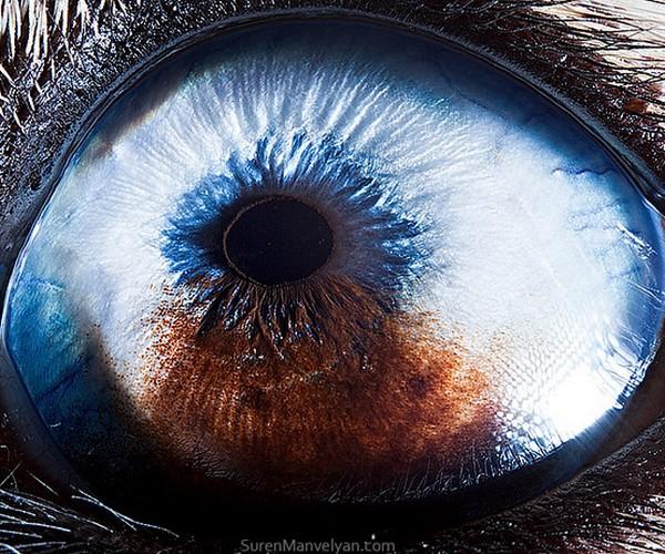 ojos alta resolucion20