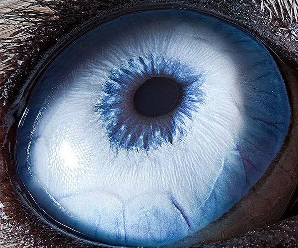 ojos alta resolucion21