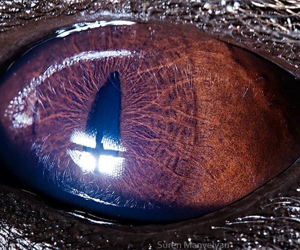 ojos alta resolucion22