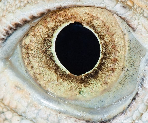 ojos alta resolucion23