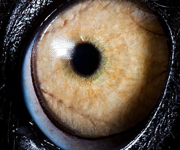 ojos alta resolucion26