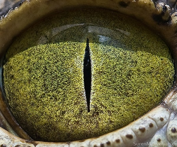 ojos alta resolucion28