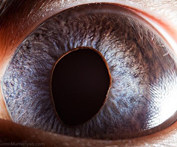 ojos alta resolucion32