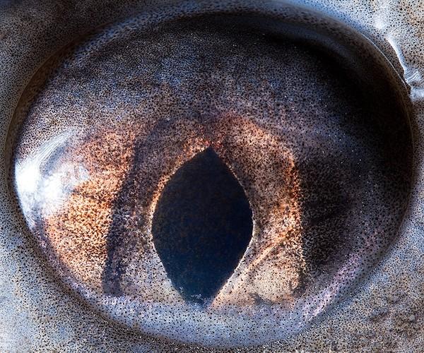 ojos alta resolucion34
