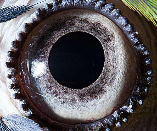 ojos alta resolucion4