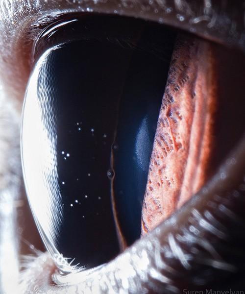 ojos alta resolucion5