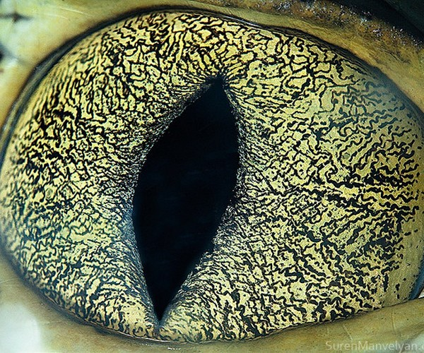 ojos alta resolucion6