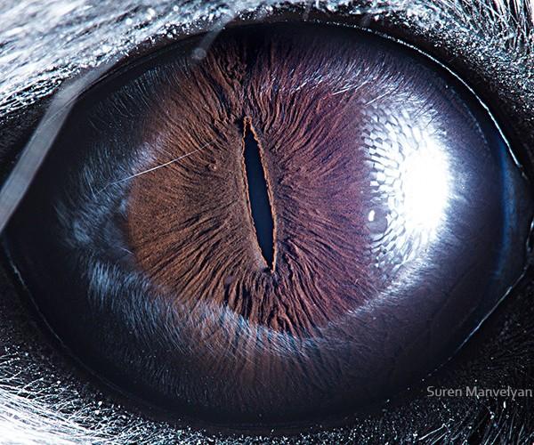 ojos alta resolucion8