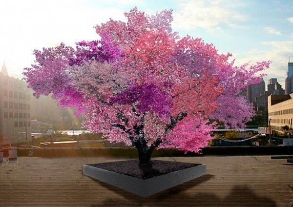 Tree of 40 Fruits,