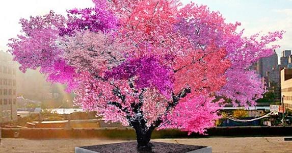 Conoce Al árbol Que Puede Dar 40 Frutos Distintos