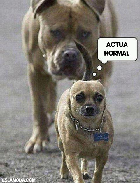 actua-normal